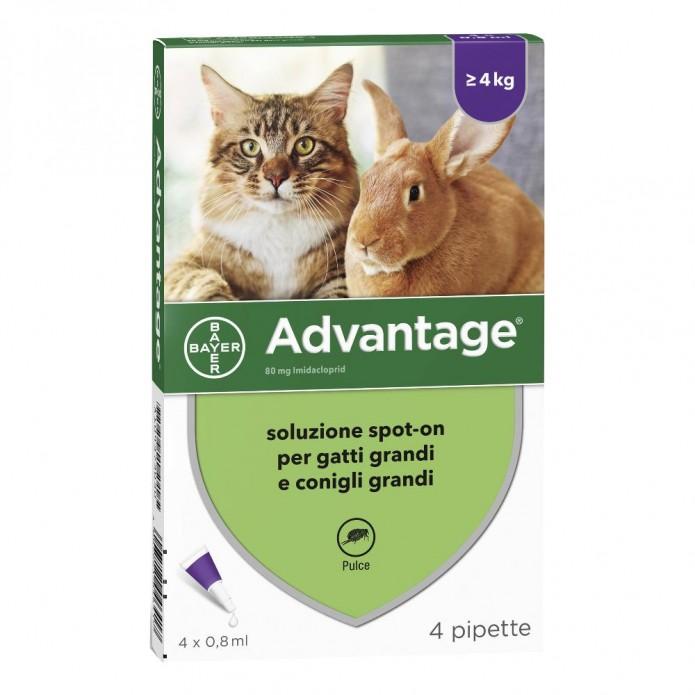 Advantage Spot On 80 mg Gatti/Conigli 4 pipette - Antiparassitario per gatti